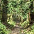 『京都×山歩き』が楽しめる初夏の名山