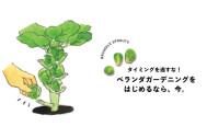 【始めるなら今!!】ベランダ菜園の勧め