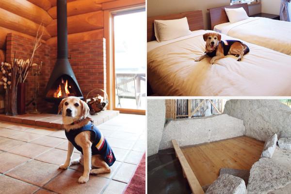 フェニックスウイング白馬|犬専用メニューに広大なドックラン。犬連れOK宿がものすごく進化している [レトリーバー]
