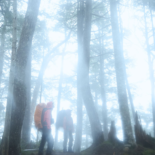 きらめく新緑、幻想的な森や湿原。雨でも楽しい山歩き [アウトドア]