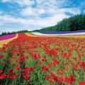 夏の旅は北海道で決まり!自然が織りなす絶景スポット富良野・美瑛で心もカラダも癒され旅