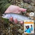 """渓流で岩魚とひと勝負! 釣ったばかりの魚はカラダも喜ぶ美味しさ!【登山ガイド・渡辺佐智の""""やまのさち""""】"""