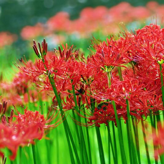 [秋のトレッキング厳選ルート]秋に色づく草花が作り出す圧巻の景色を見に行こう!