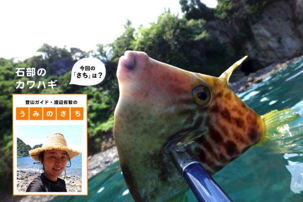 """my銛(モリ)を持っていざ西伊豆へ魚突き!【登山ガイド・渡辺佐智の""""うみのさち""""】"""