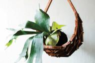 部屋に足せば一気にオシャレ空間に!【ズボラでも育てやすい植物ベスト5】