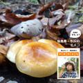 """つやつや、ぷりぷり。天然のナメコは風味が違う!【登山ガイド・渡辺佐智の""""やまのさち""""】"""