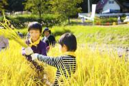 今どきの子供は田んぼのことを知らないか?【暮らし上手】【田んぼの学校体験】