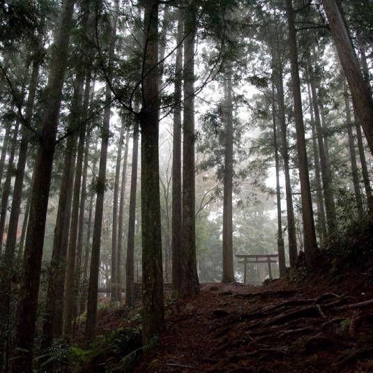 Discover Japan – UN GUIDE D'INITIATION Vol.5