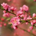 「桃の咲かない桃の節句」「梅雨時に七夕」の謎を解く! 節句と実際の季節がズレているワケ