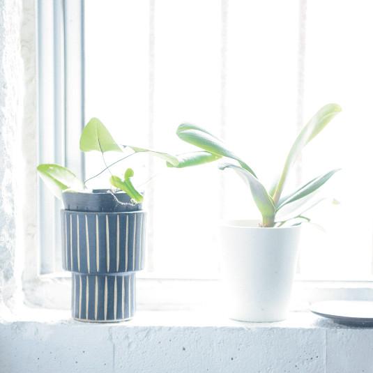 暮らしが変わる! 観葉植物超入門