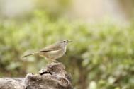 キヤノン、野鳥写真をテーマにした「野鳥フォトフェスタ」feat. CANON BIRD BRANCH PROJECT開催