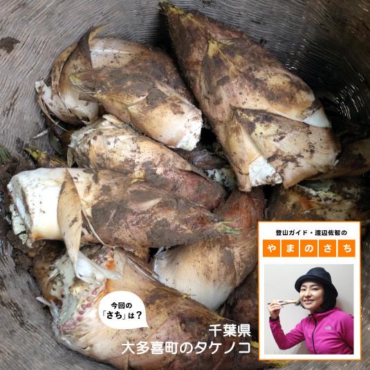 """五感で楽しむ春の味覚、タケノコは鮮度が命!【登山ガイド・渡辺佐智の""""やまのさち""""】"""