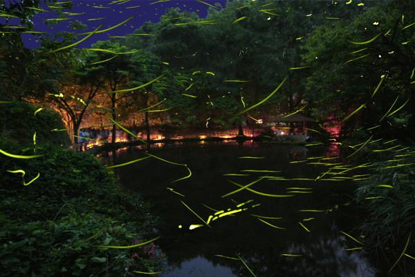 6月恒例『ほたる観賞の夕べ』 東伊豆まち温泉郷に舞う幻想絵巻を家族で
