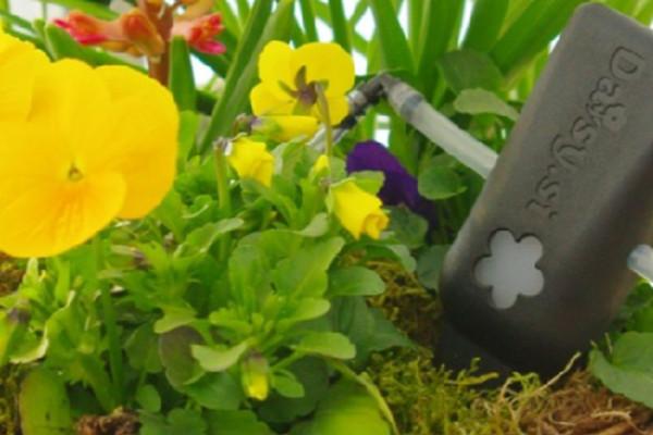 全自動の水やりツールで、海外旅行中も植物の心配を解消!