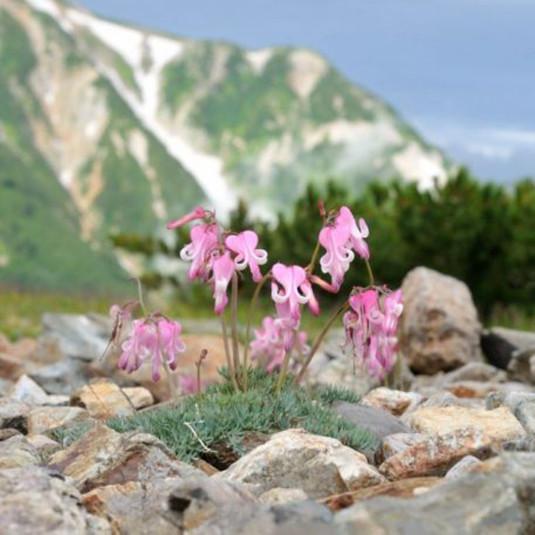 梅雨明けに目指すべき花の山、どこがおすすめ?