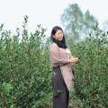 沖縄発! 世界を目指す国産紅茶