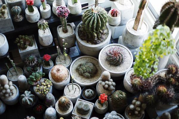癒されたいあなたに。インテリアとして置きたい植物・トレンド4種