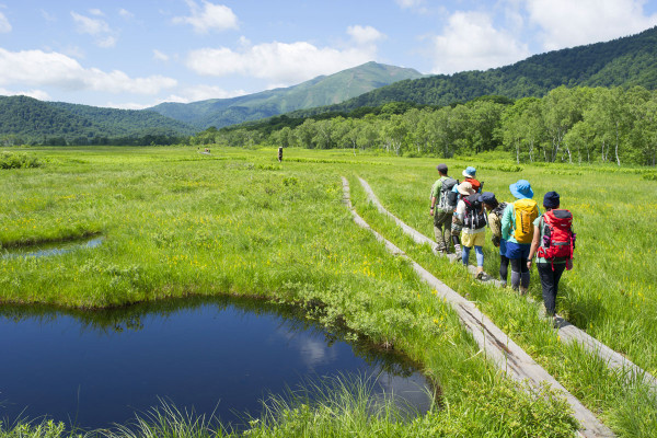【7月~8月】尾瀬ヶ原を歩くときに、覚えておくと楽しめる5つの花&植物
