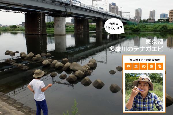 """ウン十年ぶりに弟と釣りに。多摩川で狙うは20cm以上のテナガエビ【登山ガイド・渡辺佐智の""""やまのさち""""】"""