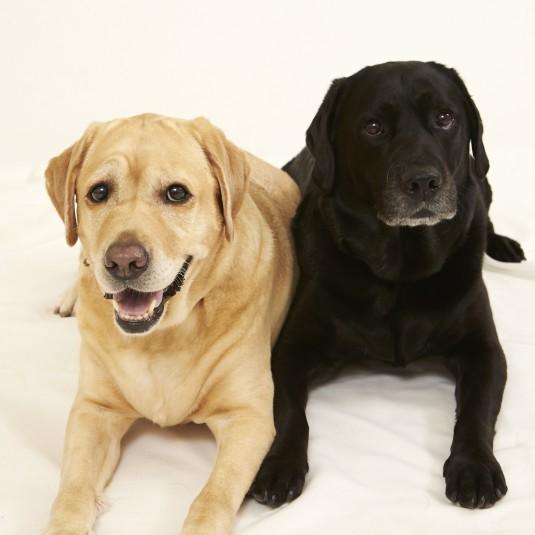 【犬の撮影テクニック】黒い毛のコも表情豊かに