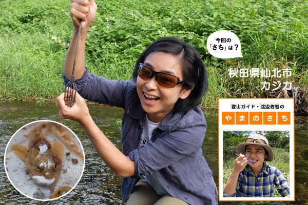 """「醜い魚は美味しい」の典型!秋の味覚カジカを求めて秋田へ【登山ガイド・渡辺佐智の""""やまのさち""""】"""
