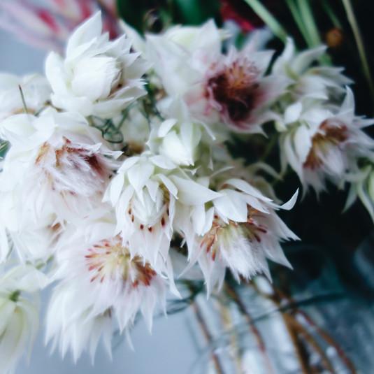 冬には冬の花が似合う。部屋を彩る花のある暮らし方