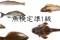 【週末に学ブオーノ】魚を好きなら読めて当然! 魚漢字検定準1級!