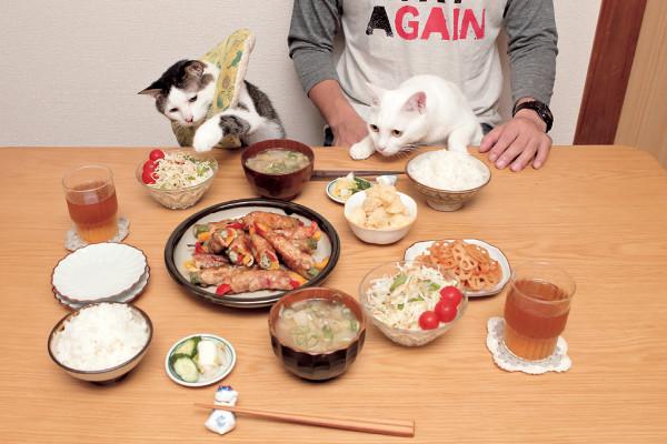 食卓にネコ
