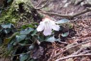 花を探しに春の山へ! 関東から日帰り山旅