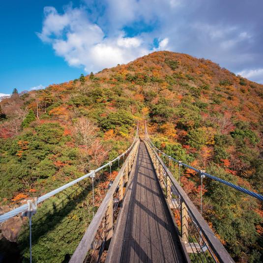 別冊DISCOVER JAPAN_TRAVEL 森の京都
