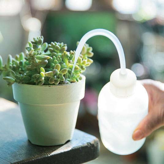 おしゃれな多肉植物。水やり、日光、肥料は? 育て方の基本