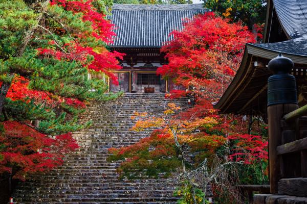 京都で一番早く紅葉が見られる絶景の地「神護寺」へ