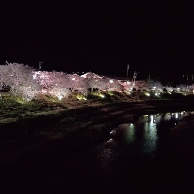 【イベント】ライトアップされた夜桜の下を走る!『第2回 みちくさ夜桜マラソン in 南伊豆町』を2018年2月17日(土)開催