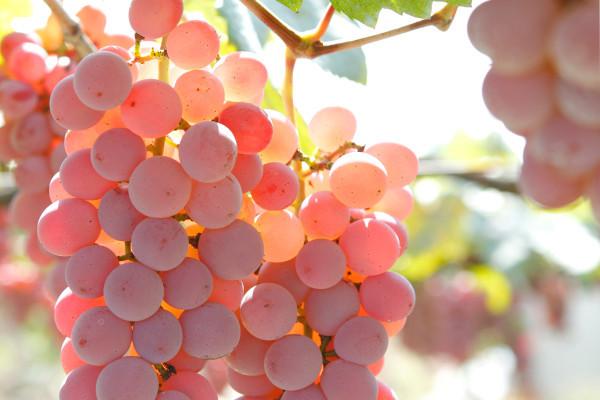 いま、日本ワインがあつい! おすすめ日本ワイナリー7選