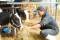 23区内唯一の牧場。穏やかな表情の牛たちが出迎えてくれる