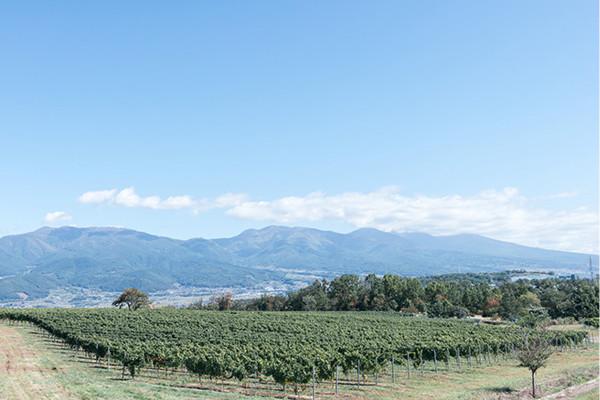 美味しさの秘密、もっと知りたい! 日本ワインQ&A