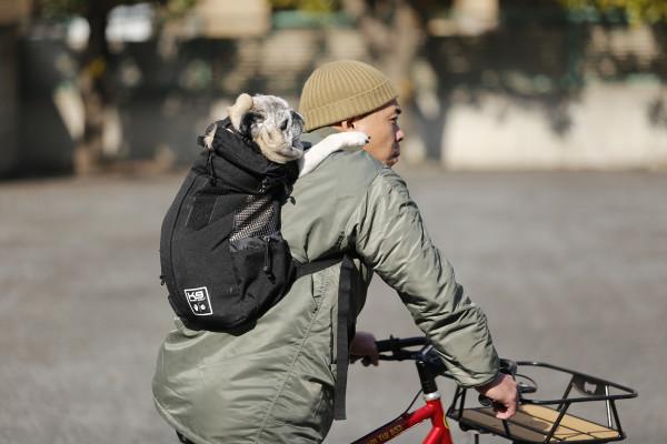 いま注目! 犬に優しいバックパックで愛犬とずっと一緒に