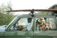 喜びや楽しみが何倍にも! 犬6匹と暮らす幸せライフ