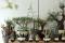 塊根植物のカリスマ『横町 健』が手掛ける、スペシャリティショップがすごい!