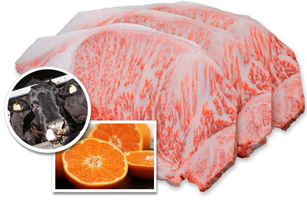 みかんを食べて育った浜松ブランド牛「みっかび牛」が堪能できる地元のお店