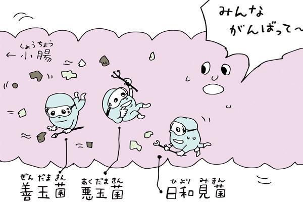 大腸は消化能力ゼロ! 知ると面白いちょっと残念なカラダの仕組み