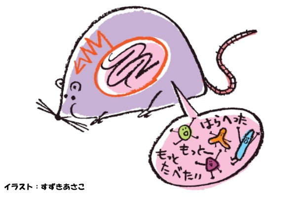 『痩せ菌』ってなに?腸内環境によって、痩せ体質orデブ体質が決まる!?