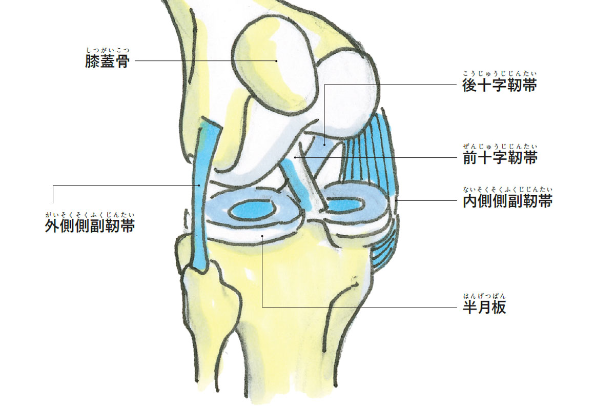 膝の痛い人が読む本