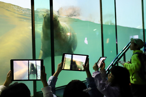 『観察力』をやしなう方法を。iPadとEveryone Can Createで。横浜・八景島シーパラダイスの取り組み